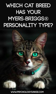 Which cat has your #MBTI type? The Russian Blue