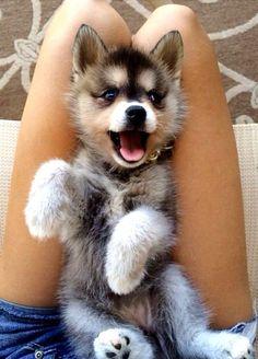 Kawaii puppy!!! by Luna-Devi