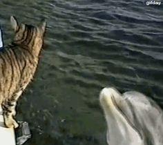 El delfin y el gato