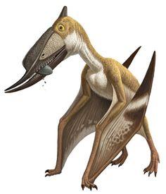 Картинки по запросу Haopterus