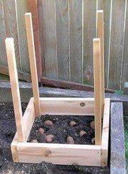 How to Grow 100 pound of potatoes in 4 square feet! According to this article from the Seattle Times, potatoes planted inside a box with this method can grow up to 100 pounds of potatoes in just 4 square feet. All that is required: