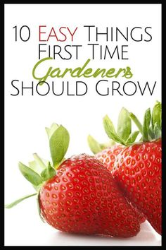10 Easy Things First Time Gardeners Should Grow