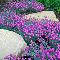 Beautiful Flower Garden For Your Front Yard 107