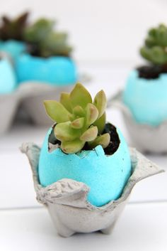 Smashed Peas and Carrots created these Ombre Dyed Eggshell Succulent Planters using just eggs, PAAS dye, dirt, and plants.