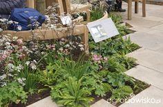 Ogród niby nowoczesny ale... - strona 1091 - Forum ogrodnicze - Ogrodowisko