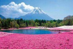 Mt. Fuji pink