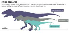 Nanuqsaurus- Diminutive dinosaur stalked the Arctic : Nature News & Comment