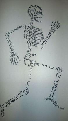 Skeleton bone labelling diagram