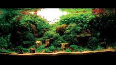 Les plus beaux aquariums - #Aquascaping http://www.youtube.com/watch?v=dFEyfSEP9o8