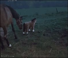 Horse reacts to stuffed pony. #horse #pony #animal #GIF