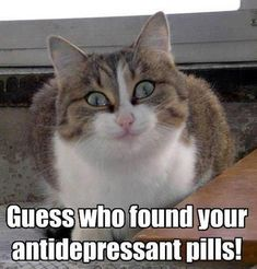 Guess who found your #antidepressant pills!