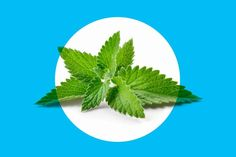 Another CPAP alternative treatment for sleep apnea is peppermint. This herb has anti-inflammatory pr... - iStock/anna1311