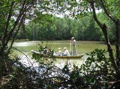 Agent Orange: Rehabilitation of Vietnamese Mangrove forests after Vietnam War.