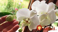 Konečne viem, ako zaručene rozkvitnúť orchideu: Túto radu mám od kamarátky, ktorá to s kvetinkami vie a kvitnú mi ako nikdy!