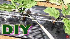 Zöldségek Kötözése Egyszerű Gyors Hatékony Módszerrel Make It Yourself, Youtube, Youtubers, Youtube Movies