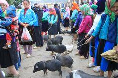 Sapa pig market