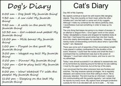 If you have dogs & cats or just need a good laugh, this dog and cat diary is hilarious. At my house, we have 2 dogs and 3 cats and it rings true. Crazy Cat Lady, Crazy Cats, I Love Cats, Crazy Dog, Haters Gonna Hate, The Bloodhound Gang, Funny Cats, Funny Animals, Adorable Animals