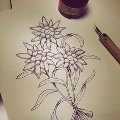 #edelweiss #dream