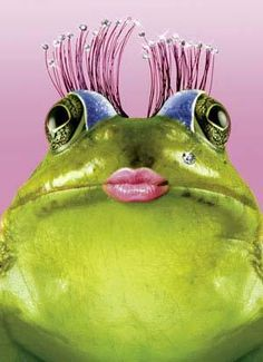 Lady Frog - Give me a kiss....