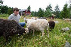 Stacks Image 366 Cow, Animals, Image, Animales, Animaux, Cattle, Animal, Animais