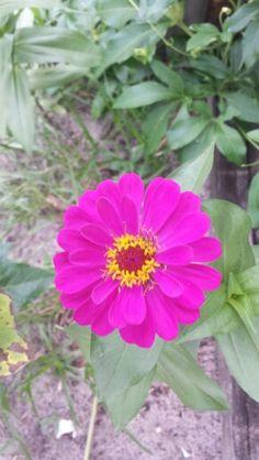 Wild Flower Florida