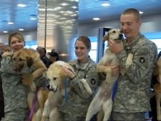 Stray dogs found in Afghanistan reunited with their soldiers