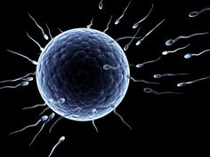 Apart from best male enhancement, improve your fertility potential through ensuring optimal sperm count and health. Male Infertility, Getting Pregnant, Bokeh, This Or That Questions, Enlargement Pills, Male Enhancement, Pregnancy, Conception, Health Facts