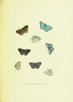 The papilios of Great Britain,. London,Printed for J. Johnson,1795..