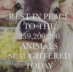 Shouldn't be this way. Doesn't have to be. Live compassionately. Go VEGAN