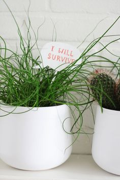 Make this cute DIY speak bubble for your plants. Let them tell you they want to survive, or make one as a gift with a loving message!