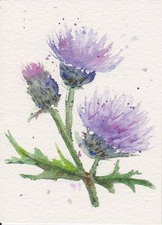 "Thistle Art ""Thistle"" Watercolor Pencil by Sarah Michaelson"