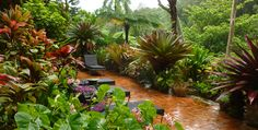 tropical gardens   Tropical Gardens of Hawaii with Graham Ross   Ross Garden Tours