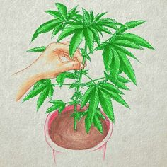 #supercropping #cannabis #Ilustration