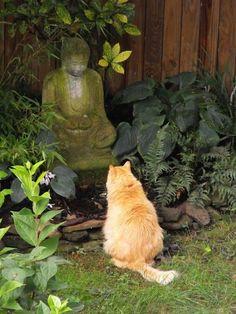 Quem foi quem disse que gatinhos não meditam e não são criaturas do bem?! Com certeza foi alguém que não sabe amar...