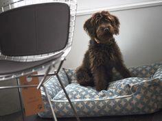 Wolltest Du schon immer mal mit Deinem Hund nach New York?  Das Hotel The James hat extra Hunde-Angebote wie Karten für's Gassigehen und Hundebetten :-) http://www.lastminute.de/reisen/8863-89753-hotel-the-james-new-york-new-york-city/?lmextid=a1618_180_e30