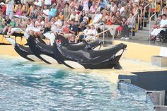 Orcas can not thrive at Sea World, based on Fact not opinion.