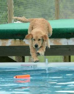 Ed Mcdaniel/Whole Lotta Dogs on facebook - June 13    Midas learning dock diving https://www.facebook.com/photo.php?fbid=10204331560755989set=o.261671233848155type=1theater