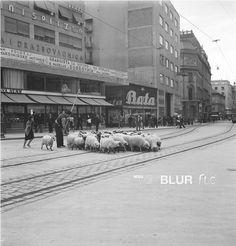 Toso Dabac / Urban sheeps in Zagreb #croatian #photography #dabac