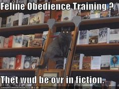 Library LOLcat.