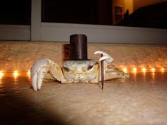 Classy Crab - I've never seen a crab in costume before!