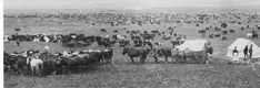 oregon cattle 1800s - Google Search Cattle, Oregon, Dolores Park, Holidays, Google Search, Books, Travel, Livros, Holidays Events