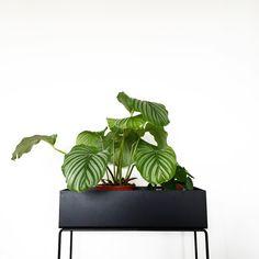 ferm LIVING plant box: https://www.fermliving.com/webshop/shop/green-living/plant-box-black.aspx