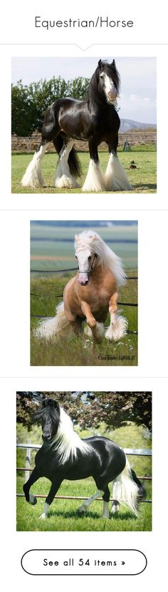 """Equestrian/Horse"" by drskullz on Polyvore featuring animals, home, home decor, wall art, horses, backgrounds, pictures, cloud picture, western wall art and photographic wall art"