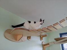 Goldtatze - Designer Natur-Kratzbäume und Katzenzimmer #cats