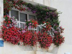 Цветы из сада на балкон - Изготавлимаем цветы