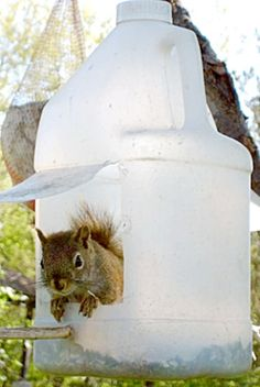 Recycled Squirrel (or Bird) Feeder - (*Feelin' Squirrely group board*)
