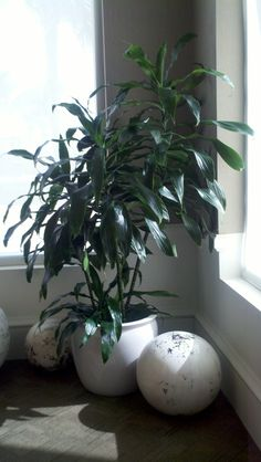 30 Best Low-Light Solutions images | Low light plants, Indoor plants Janet Craig Plant House Html on