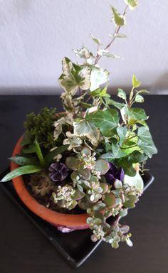 Succulents, Flowers, Plants, Flora, Succulent Plants, Plant, Royal Icing Flowers, Flower, Florals