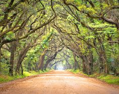 Botany Bay Road near Edisto