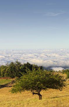 #Canarias #CanaryIslands #GranCanaria Mar de Nubes by Fernando Pérez Santana on 500px